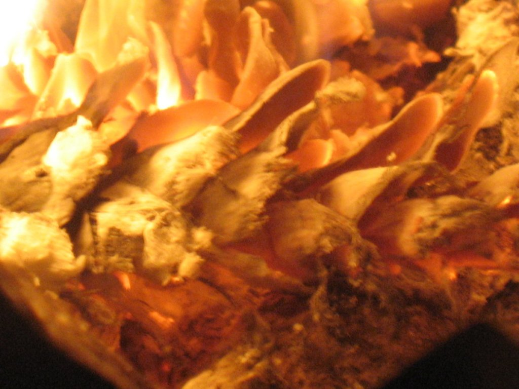 Pinecone roasting on an open fire.